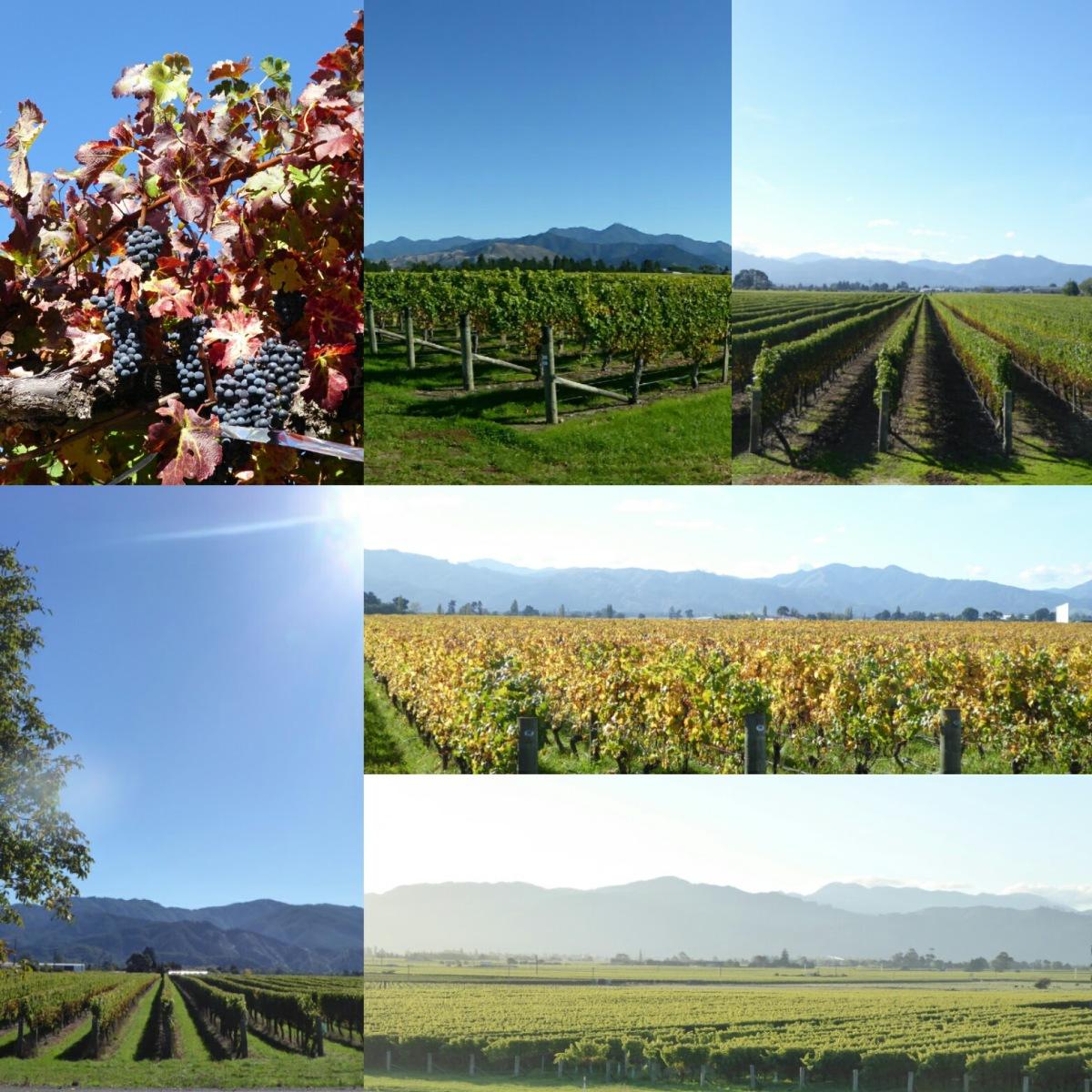 23.4.3017 Marlborough vineyards Day3